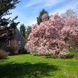 7 Reasons for Spring Tree Care Services in Short Hills, New Jersey