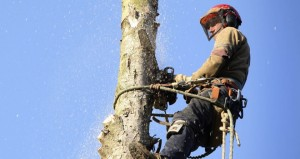 tree-removal-vauxhall-nj-brennan-s-tree-service-tree-experts-inc-hero1