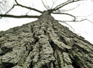 Tree Care Expert NJ Dead Branches