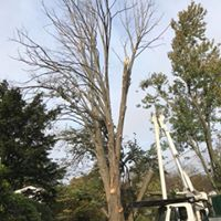 5 Fall Tree Care Tips for New Jersey Homeowners