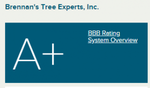 BBB Business Profile Brennan s Tree Experts Inc