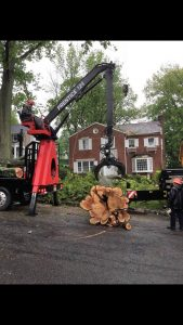 Large Tree Removal West Orange New Jesey
