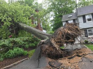 Fallen Tree Montclair New Jersey
