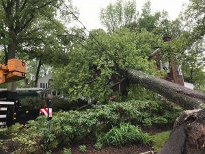 Tree Removal Montclair New Jersey
