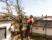 Tree trimming service, tree pruning, dead branch removal services, Tree services in New Jersey, New Jersey Tree Expert