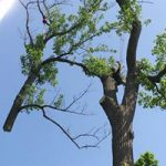 Brennan's Tree Service, Large Branch Removal with Crane